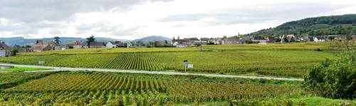 beaune vineyards