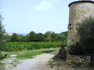 Gigondas vineyards
