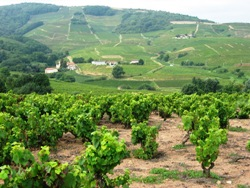Wine Tour Holiday Beaujolais
