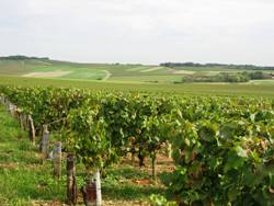 Chablis French Wine Tours