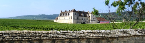 Burgundy Wine Tour France vineyard