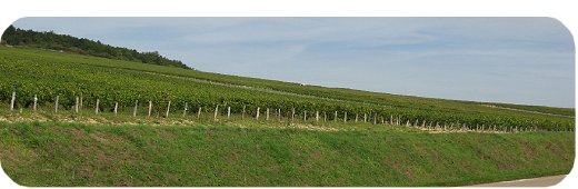 Wine Tours In France - Chablis