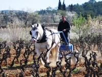 Wine Tour Holidays In Languedoc